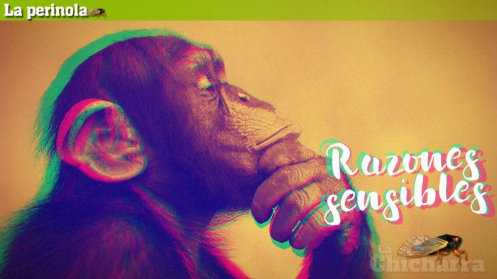 La Perinola: Razones sensibles