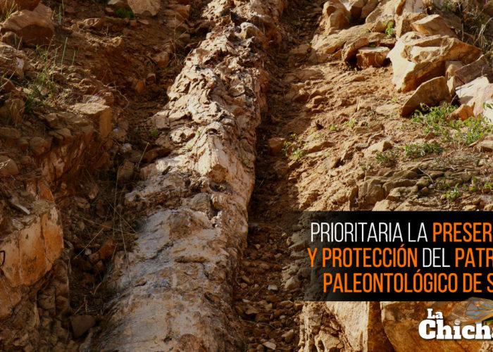 Prioritaria la preservación y protección del patrimonio paleontológico de Sonora