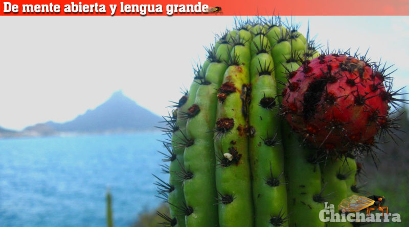 De mente abierta y lengua grande: La pitahaya ganadora